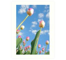 Pink and White Tulips 03 Art Print