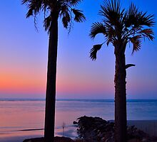Palm and Moon over Water by Chris King