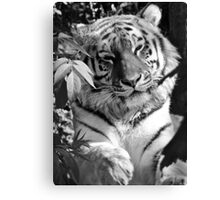 Tiger (1) Canvas Print