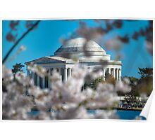 Cherry Blossom at Thomas Jefferson Memorial Poster