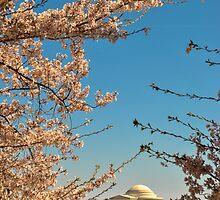 Cherry Blossom at Thomas Jefferson Memorial 3 by Gustavo Bernal