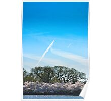 Cherry Blossom at Potomac River 2 Poster