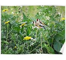 A Pair of Goldfinches  Poster