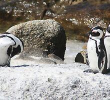 3 South African Penguins by NinjaGlue
