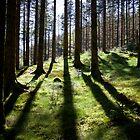 Backlit forest by Algot Kristoffer Peterson