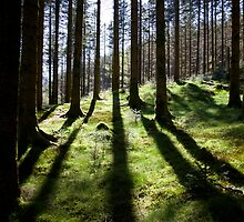 Backlit forest by Algot Kristoffer Peterson