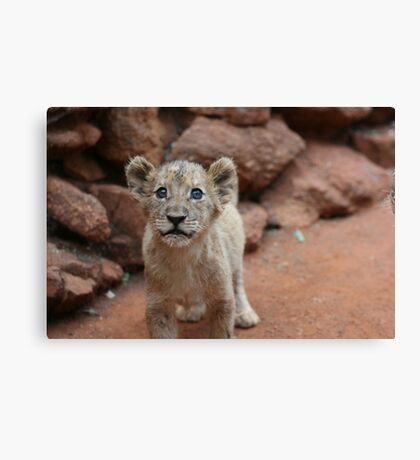 Cutest Lion Cub Ever Canvas Print