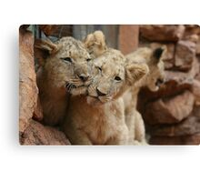 Lion Cubs in South Africa Canvas Print