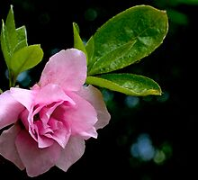Wish I was a Rose by Otto Danby II