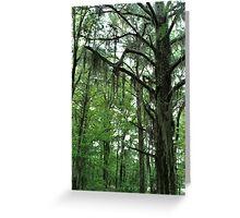 Louisiana Trees 1 Greeting Card