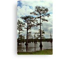 Louisiana Trees 2 Canvas Print