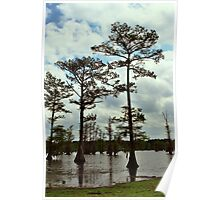 Louisiana Trees 2 Poster