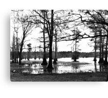 Louisiana Trees 3 Canvas Print