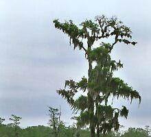 Louisiana Trees 5 by Emily Rose