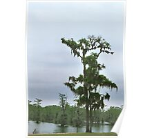 Louisiana Trees 5 Poster