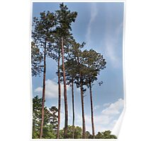 Louisiana Trees 6 Poster