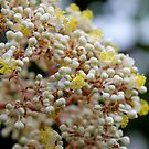 Floral Popcorn by dgscotland