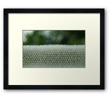 Furry Carpet Framed Print