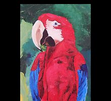 Parrot Scarlet Macaw Tropical Bird - Samsung Covers by PhoneCase
