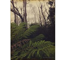 Rainforest No.11 Photographic Print