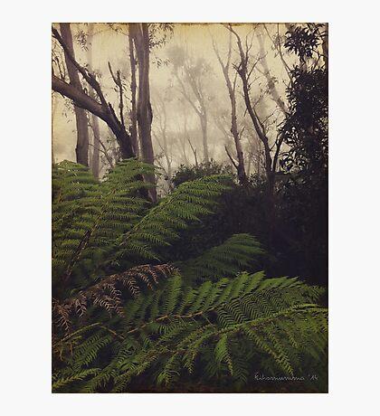 Rainforest No.11 Photographic Print