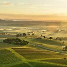 Vineyards of Hunter Valley by andreisky