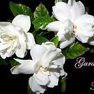 Gardenias For Mom by AuntDot