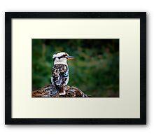 Kookaburra Sits... Framed Print