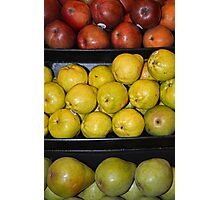 Bartlett Red Anjou and Comice Pears  Photographic Print