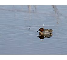 Drake Green-winged Teal 1 Photographic Print