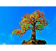 'Tree in the sky' Photographic Print