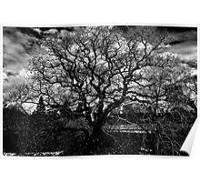 'Dark Tree' Poster