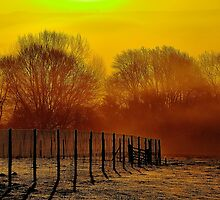 'Yellow Haze' by NaturesEarth