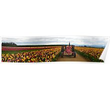 Woodburn Tulip Festival Panorama  Poster