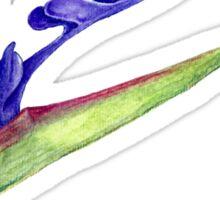 Bird of Paradise- 1 Sticker