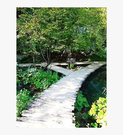 wooden path Photographic Print