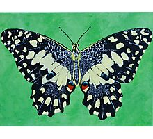 Butterfly #1 Photographic Print