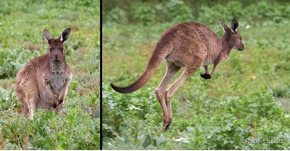 "Western Grey Kangaroo ~ ""Hello and Goodbye"" by Robert Elliott"