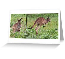 "Western Grey Kangaroo ~ ""Hello and Goodbye"" Greeting Card"