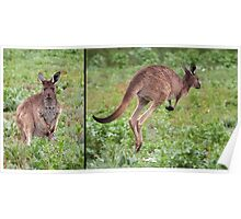 "Western Grey Kangaroo ~ ""Hello and Goodbye"" Poster"