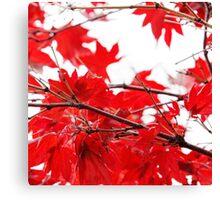 Autumn 1 Canvas Print