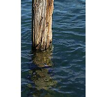 Single Old Piling 4 Photographic Print