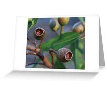 Corymbia nuts Greeting Card