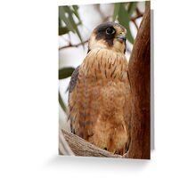 Australian Hobby Greeting Card