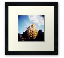 Yellow Tree Blue Sky Framed Print