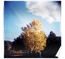 Yellow Tree Blue Sky Poster