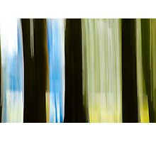 Abstract Forest, Paradise, New Zealand Photographic Print