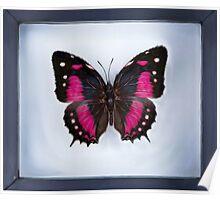 Butterfly in Frame (Digital Art) Poster