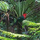 Rainforest Parrot by KazM
