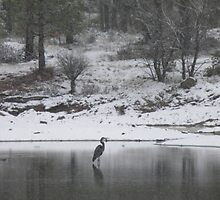 Heron in the Snow by Jamie Peterson